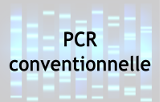 PCR Conventionnelle