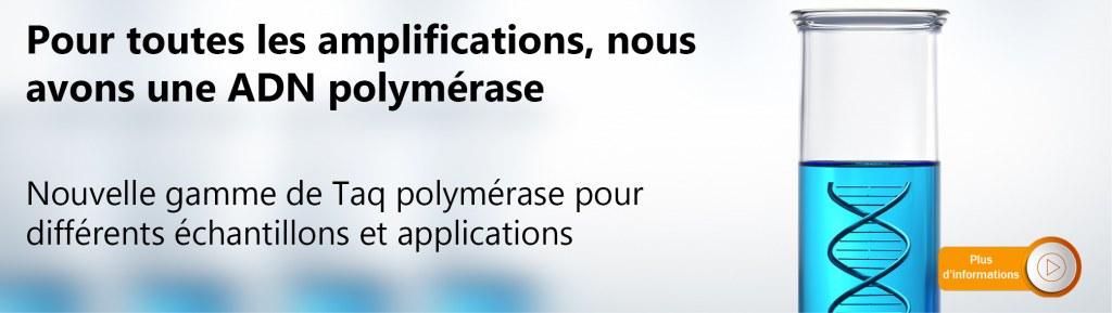 ADN polymerases